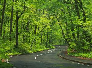 road_wallpaper_da058005a